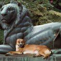 Софийски лъвове II, 2005, дигитален отпечатък върху платно, 100 x 230 cм